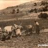 Годините на првата светска војна: Орачи од Прилепско...