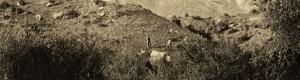 1917: Беловодица...