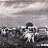 """6 април 1950: Женска бригада во селската работна задруга """"Матија Губец"""" од Дреновци ."""