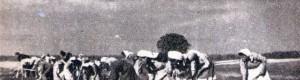 """6 април 1950: Женска бригада во селската работна задруга """"Матија Губец"""" од Дреновци"""