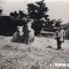 Вршење на пченица на гумно. Коста Трајчески од Клепач