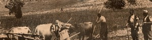 Прва светска војна: Орачи од Прилепско...